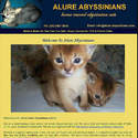 Alure Abyssinians - www.alure-abyssinians.com