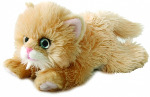 Personalised orange persian kitten