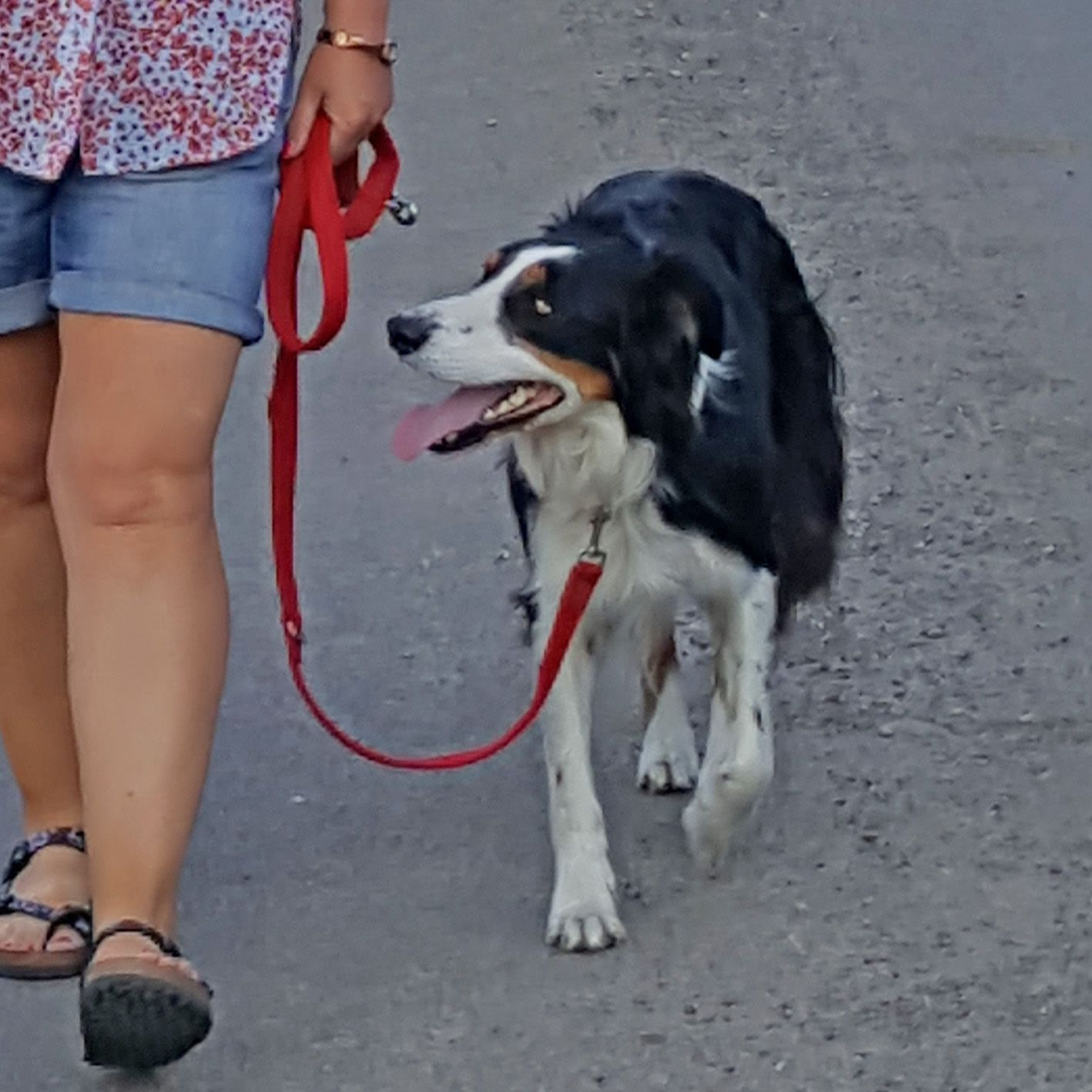 Walk your dog on a loose lead