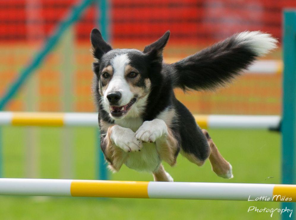 Agility Jump @ Lottie Miles