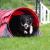 WS Tunnels_JoWo_Roxy_Tunnel_03