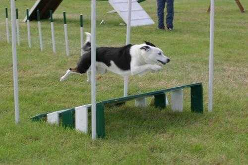 SWAT - Kye long jump