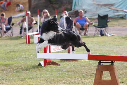 SWAT - Raq flying in Royal Canin final - pic by John Ord