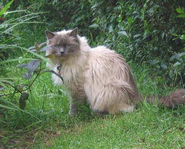 Smokie Blue Cpt 2007