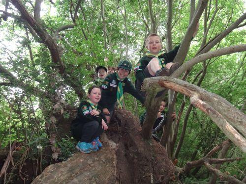 256 Tree climbing Cubs