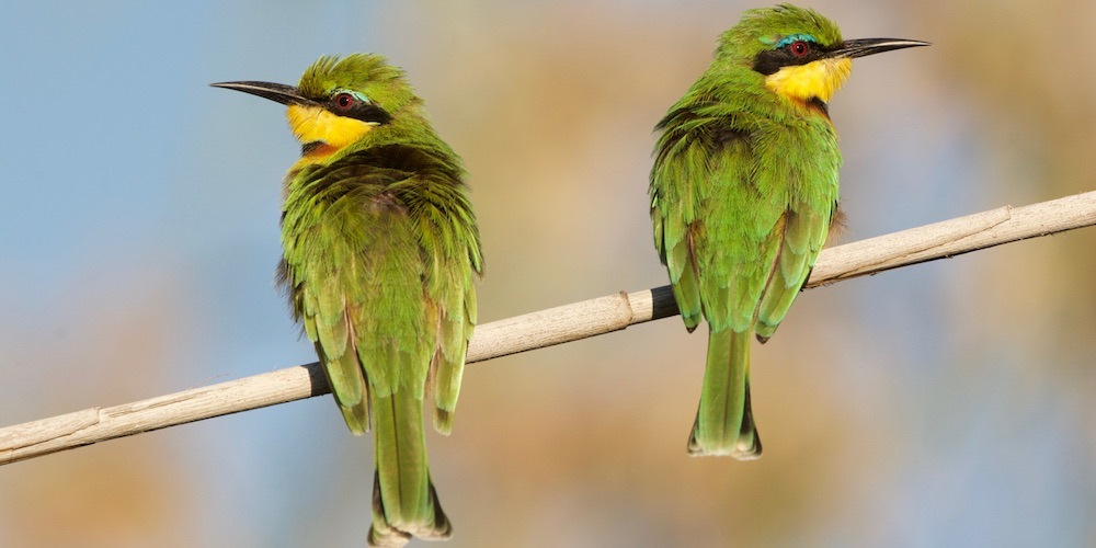 bee eater 1000 banner