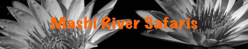Mashi River Safaris, site logo.