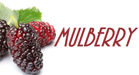 Mulberry  - Price from