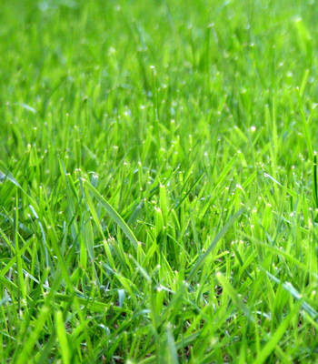 Fresh Cut Grass. Price from