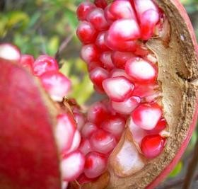 Pomegranate - Price from