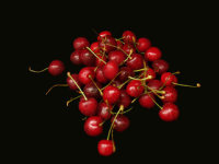 Black Cherry Explosion - Price from