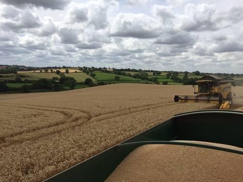 FH wheat 2015