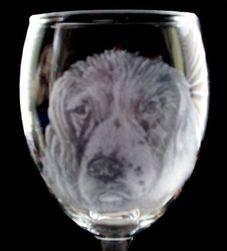 wine spaniel head