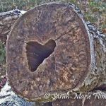 Tree of Love.