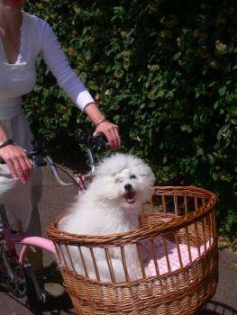 Millie pup in basket