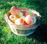 Small round basket with apples