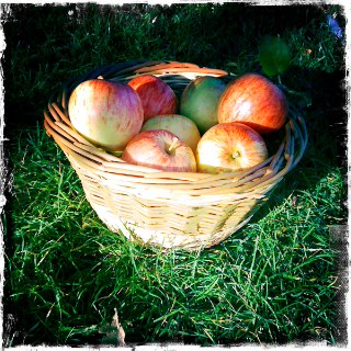 Small round basket with apples2