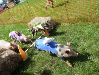 Goosnargh & Longridge Show - July 2017 (9)_mini