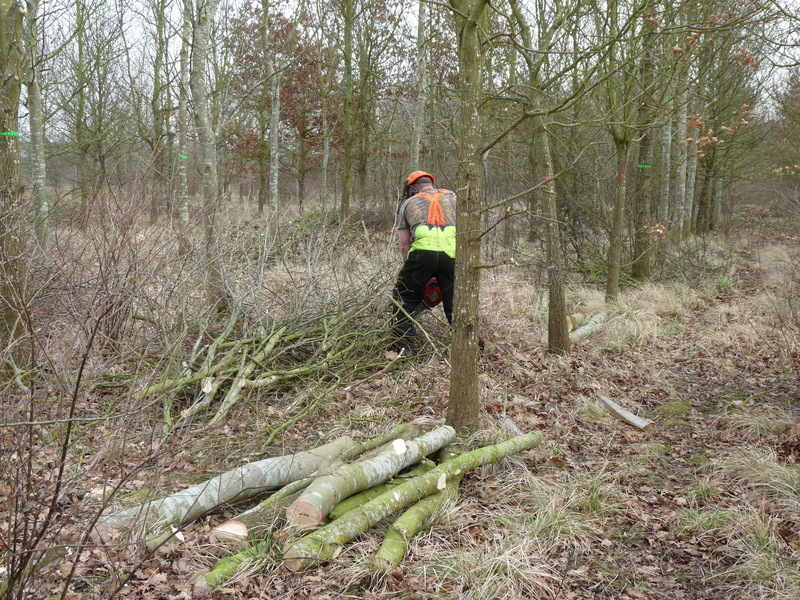 woodland working