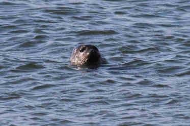 shaz stanley seal