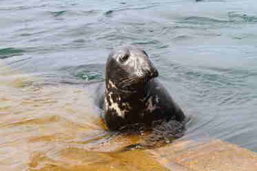 seal fionphort