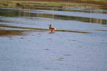 sharon deer dip