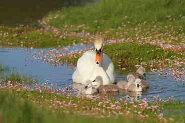 sharon swans 7
