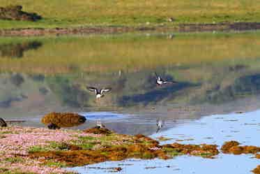 birds lochdon