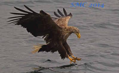 eagle Loch na Keal 1