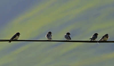 family on the wire