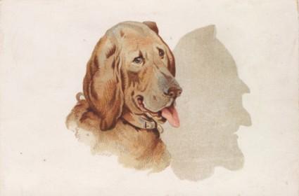 Dog Shadow Card