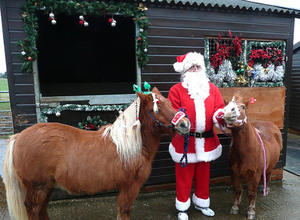 Santa and the Cuddly Ponies