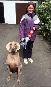 dog show 2014 barney