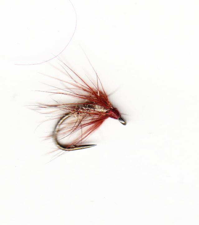 2011 GRHE SPIDER