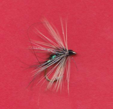 FW CLARET SPIDER