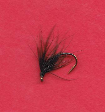 FW NC BLACK SPIDER