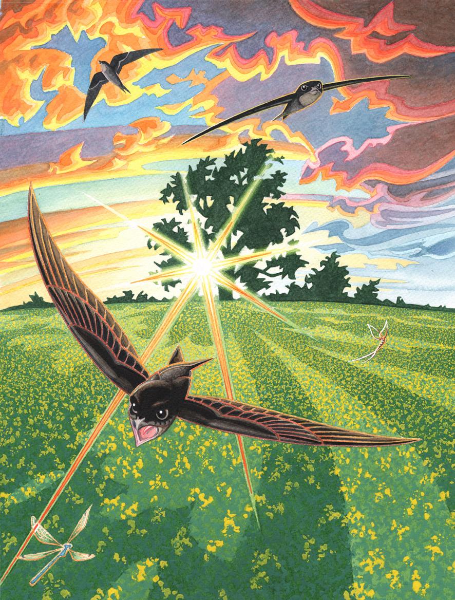 Three Swifts