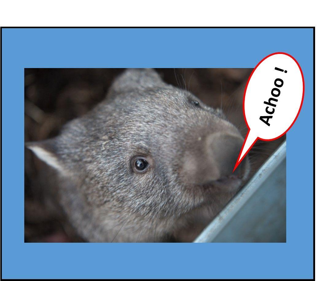 Sneezy Wombat