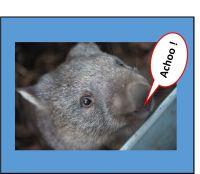 Sneezy Wombat - 50g