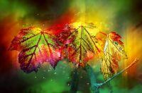 <!--002-->Shimmering Fall - 100g
