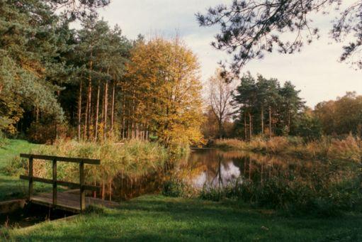 willingham_woods