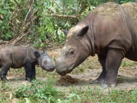 Rhino holidays from Responsible Travel