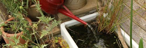 Make a small pond for wildlife - here's how