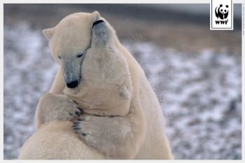 Send ecards to support WWF
