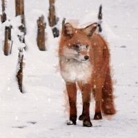 Visit Sussex Wildlife Trust to see their Christmas Cards