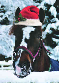 Click here to see the Christmas cards from Bransby Horses Rescue and Welfare