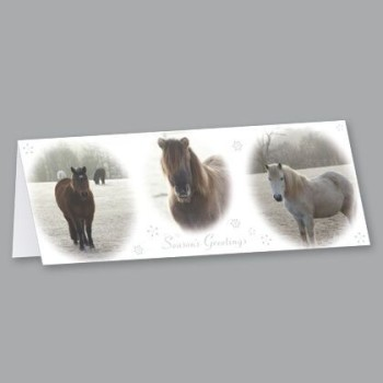 Canter away to see Redwings Horse Sanctuary's Christmas cards