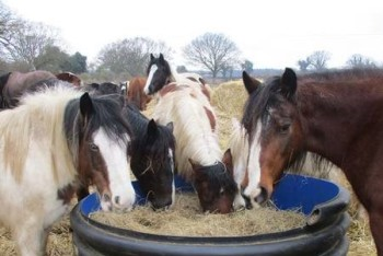 Give rescue animals a bale of hay at the Hillside Animal Sanctuary