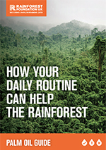 How Your Daily Routine can Help the Rainforest