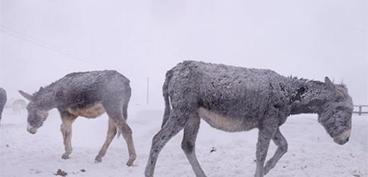 Help these charities help donkeys, horses and animals in need in Italy's heavy snows